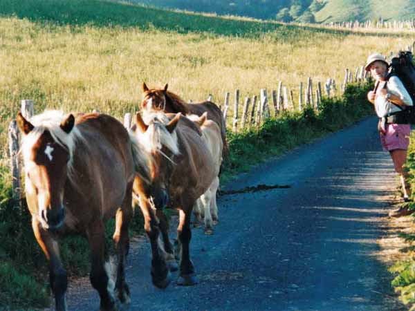 Walking in France: Pottoks - prehistoric horses of the Pyrénnées