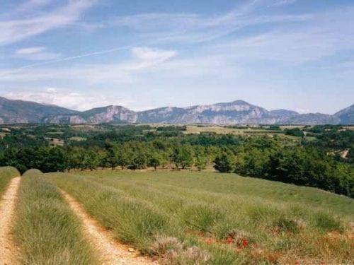 Walking in France: Lavender farm