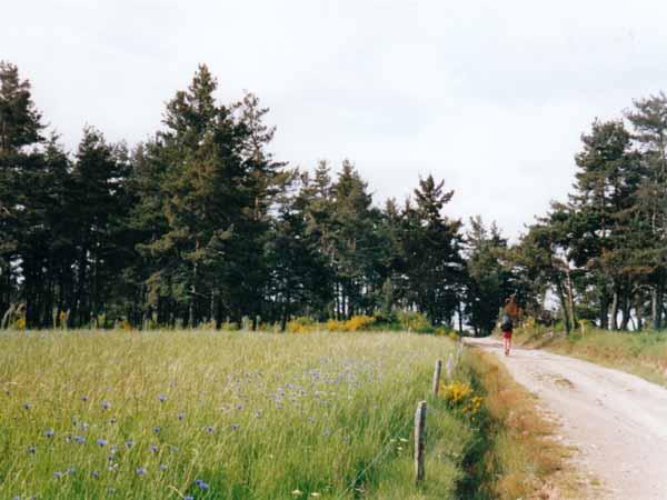 Walking in France: Walking past a field of cornflowers