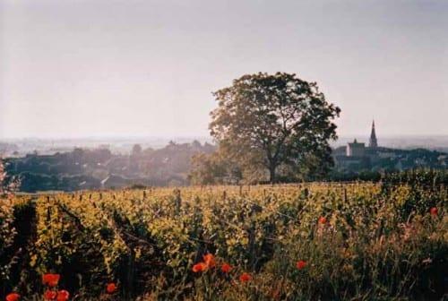 Walking in France: Leaving Meursault