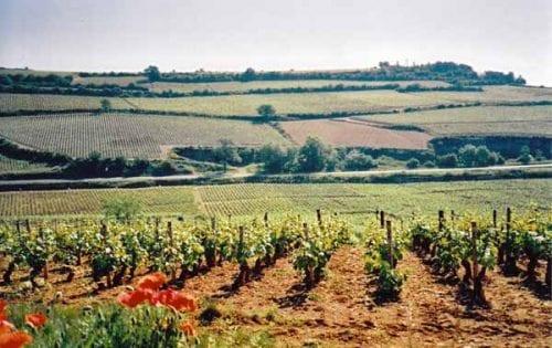Walking in France: Vineyards near Gamay