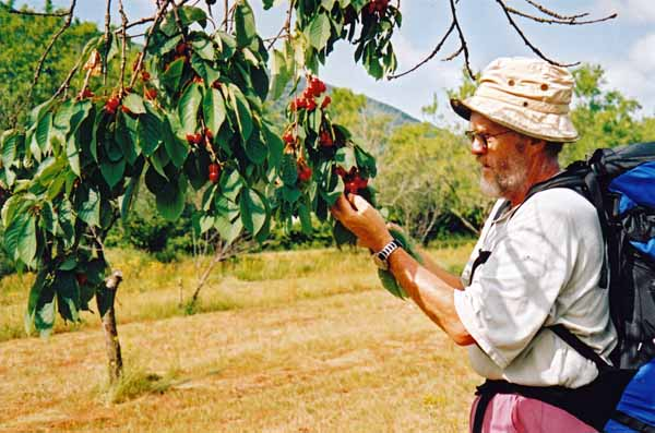 Walking in France: Free cherries on the Piste Verte