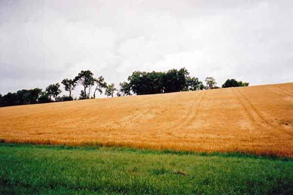 Walking in France: Wheat fields of Gascony