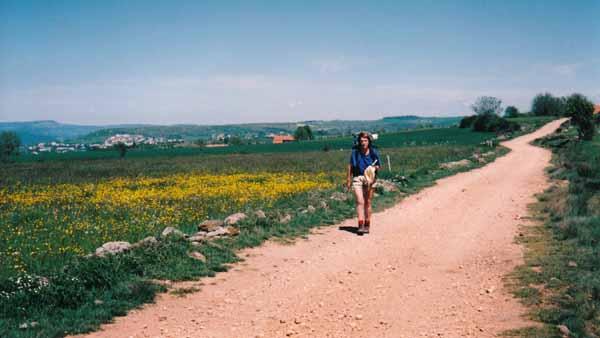 Walking in France: Fields of flowers beside the track