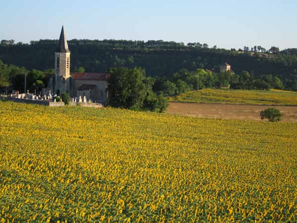 Walking in France: A church in a field of sunflowers