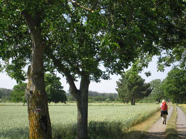 Walking in France: Still on the Roman road (with GR sign)