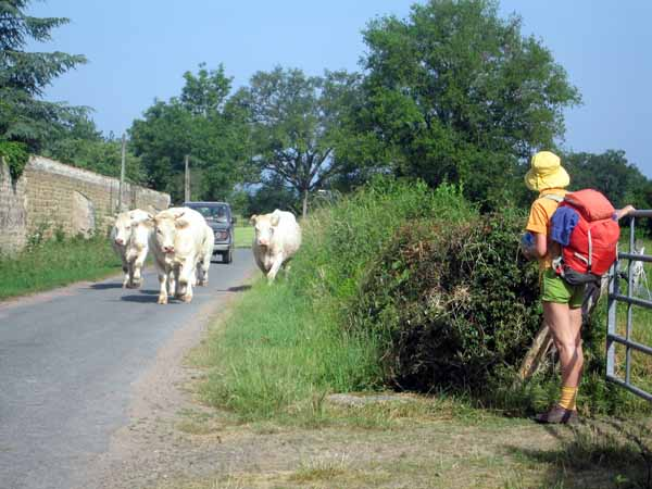Walking in France: Giving some locals a wide berth