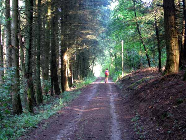 Walking in France: Deep in the Morvan forest