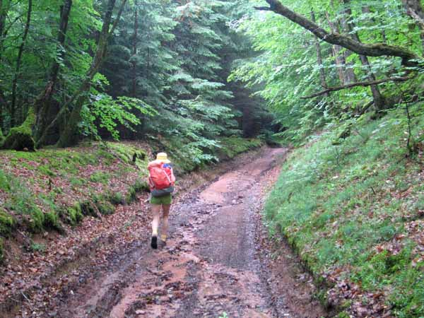 Walking in France: Heavy going through the forest