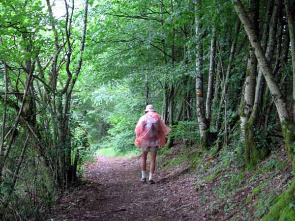Walking in France: Wet in the forest