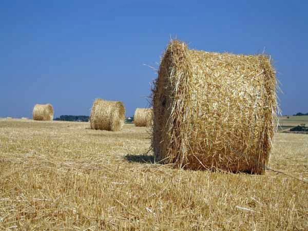 Walking in France: Golden rolls of hay