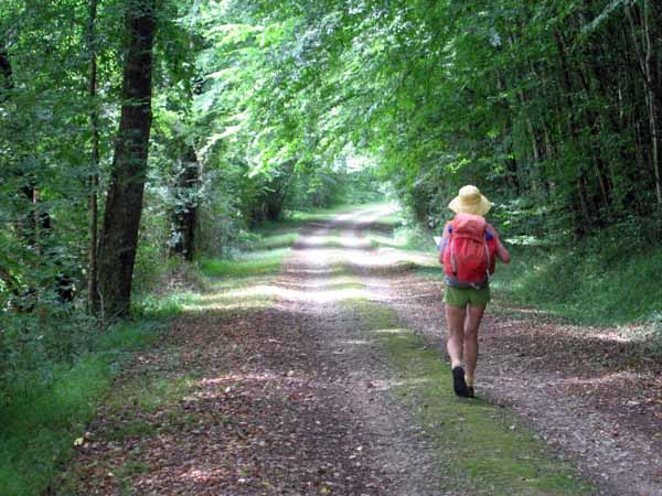 Walking in France: Striding through the forest towards the D127