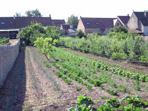 Walking in France: One of the long backyard vegetable gardens in Saint-Claude-de-Diray