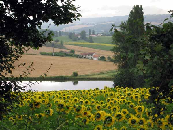 Walking in France: Sunflowers near Lauzerte