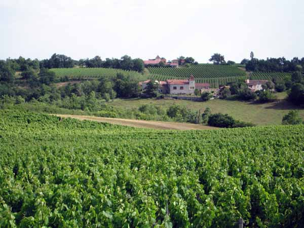Walking in France: Vines of the Cahors appellation