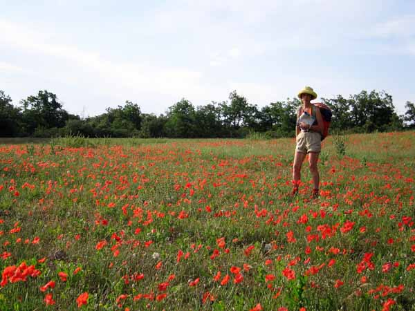 Walking in France: Yet more flowers on the way to Viens