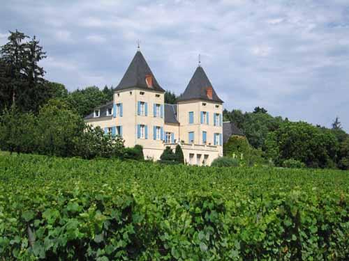 Walking in France: More vines