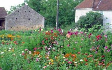 Walking in France: Cottage flower garden