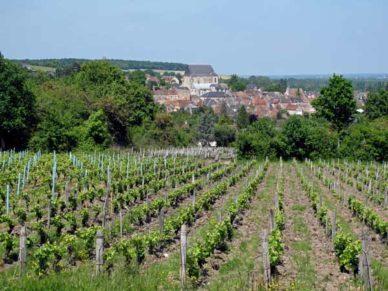 Walking in France: Looking back to Saint-Satur across Sancerre vineyards
