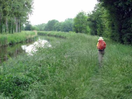 Walking in France: Heavy going in the long wet grass