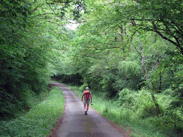 Walking in France: In the forest near Vilaine