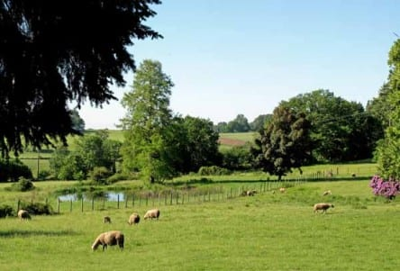 Walking in France: A bucolic scene beyond the imagination of Australian sheep