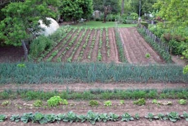 Walking in France: One of the vegetable gardens near the camping ground
