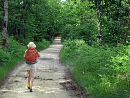 Walking in France: Climbing into the forest