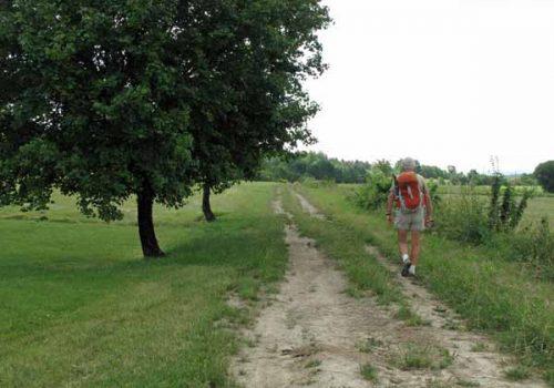 Walking in France: Back on the Roman road