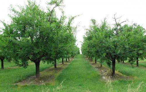 Walking in France: Prune orchard near Cancon