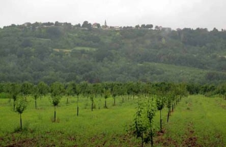 Walking in France: Looking across prune orchards to Laparade