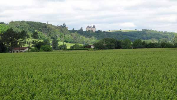 Walking in France: Buzet vineyards with the château of Buzet in the distance