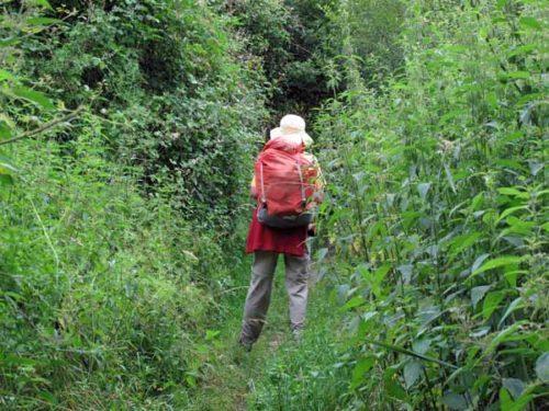 Walking in France: Dwarfed by stinging nettles