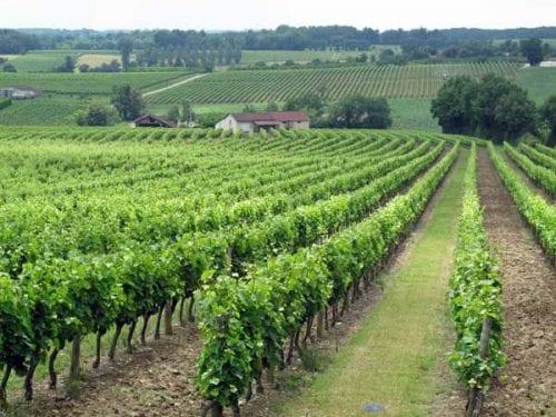 Walking in France: Vineyards of Armagnacrds