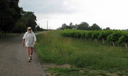 Walking in France: And more rain
