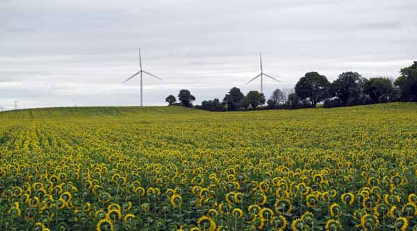 Walking in France: Sunflowers and wind turbines on the way to Mehun-sur-Yèvre