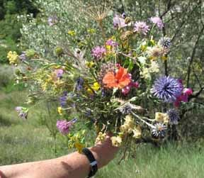 Walking in France: Jenny's posy of wildflowers