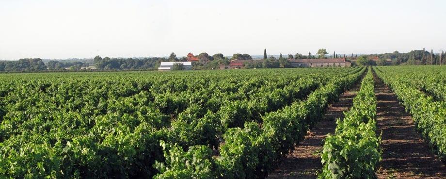 Walking in France: Passing a vineyard