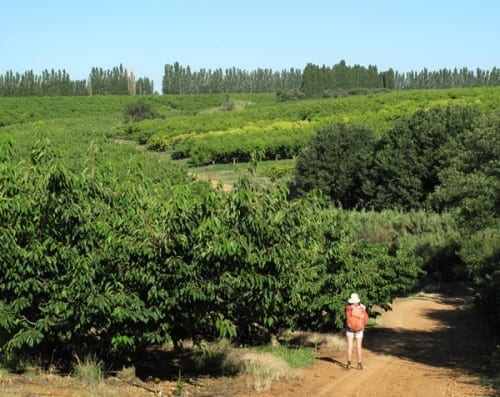 Walking in France: In an enormous orchard