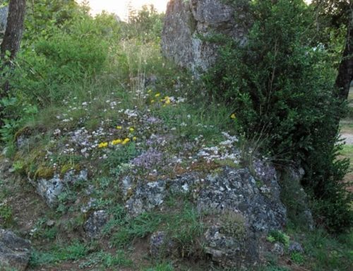 Walking in France: A rocky outcrop covered with wildflowers next to our tent