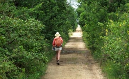 Walking in France: The final straight walk to L'Hospitalet