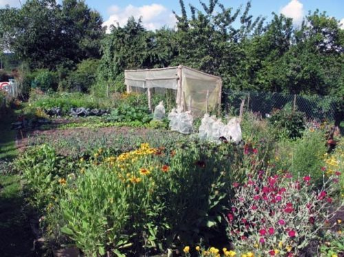 Walking in France: The lovely garden in la Vilatte