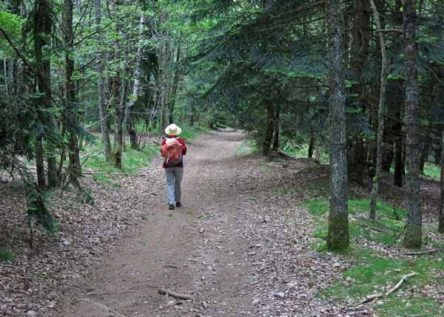 Walking in France: Descending through the pines