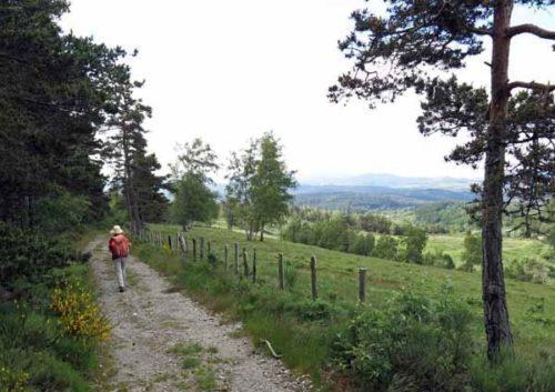 Walking in France: Beside the pine wood