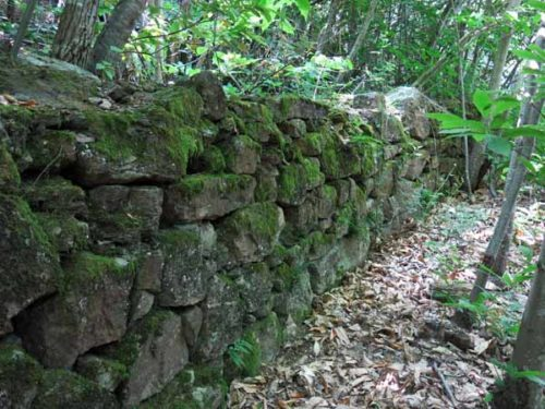 Walking in France: A mossy stone wall beside the track near la Tavernole