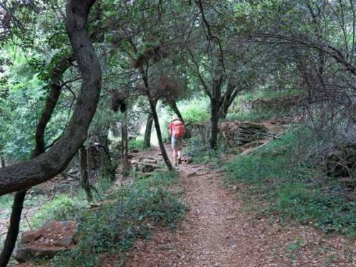 Walking in France: In a beautiful forest
