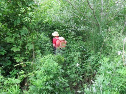 Walking in France: Deep in the nettles