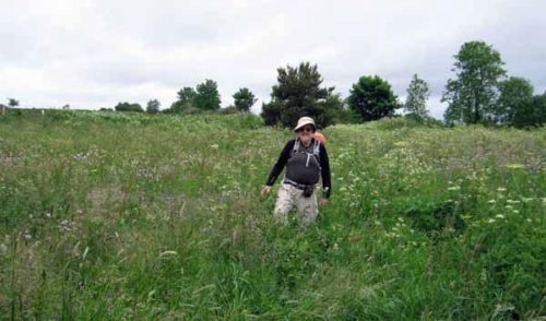 Walking in France: Lost in the weeds