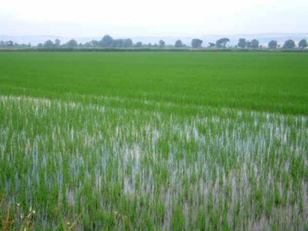 Walking in France: A French rice paddy