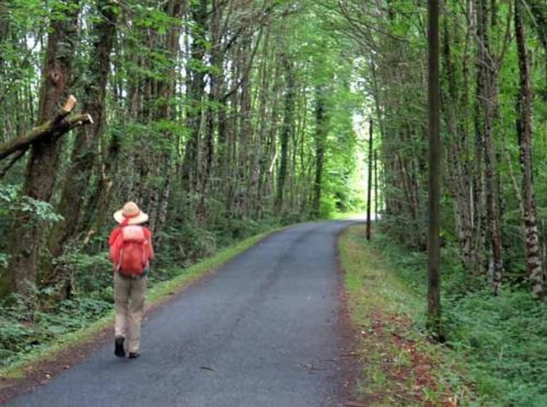 Walking in France: In the forest